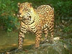 wildlife-predator